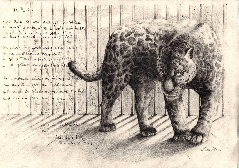 Der Panther nach R. M. Rilke, Bleistift
