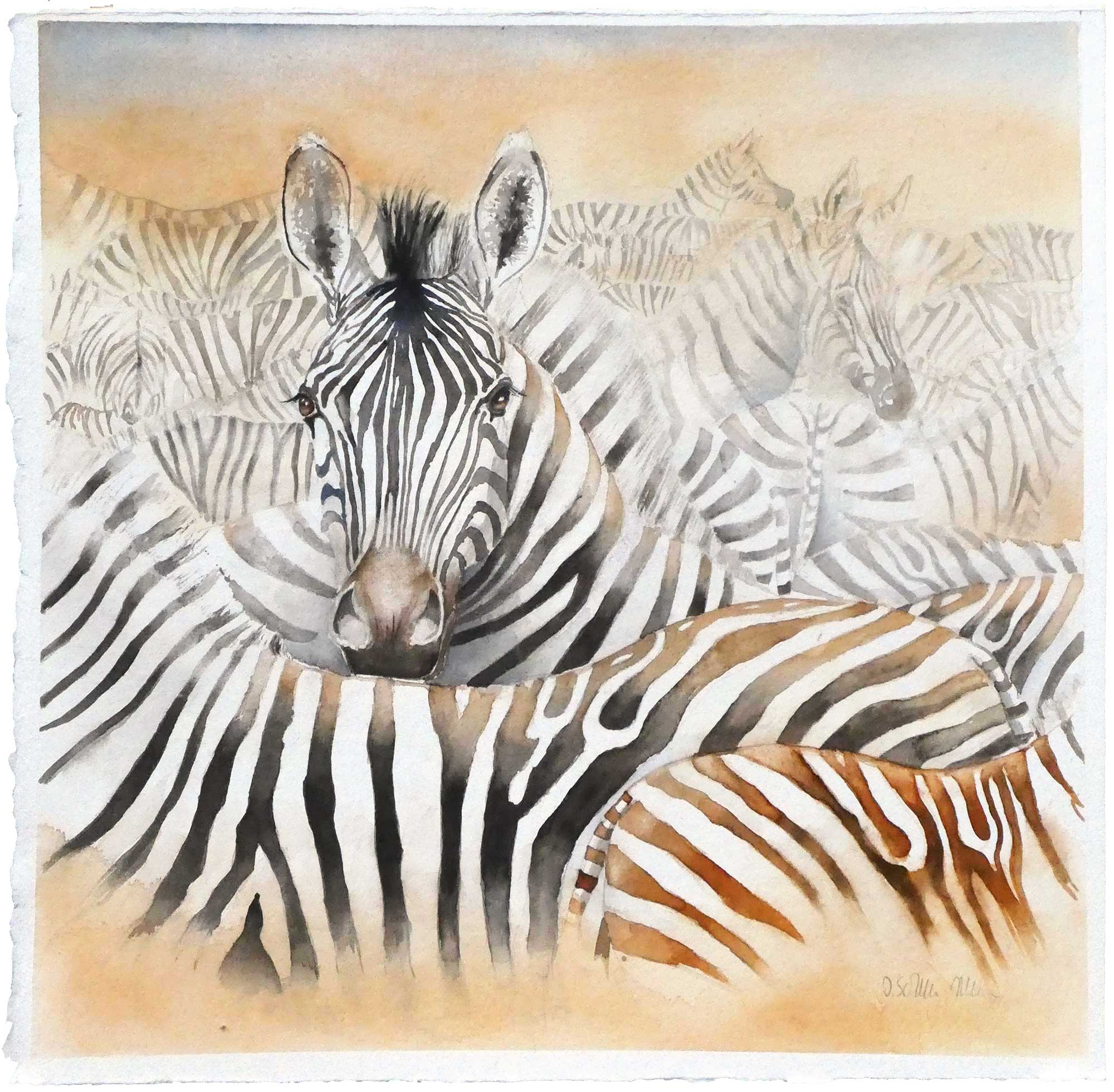 Zebras in der Steppe