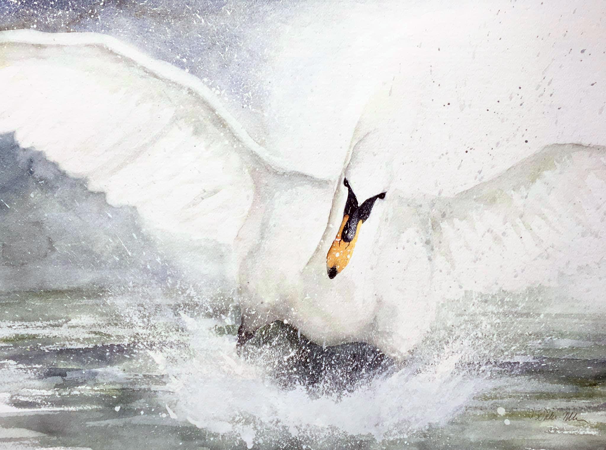 Schwan landet auf dem Wasser